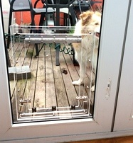 Hungarian Visla Glass Fitting Dog Door